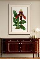 Illustration D'Orchidee I