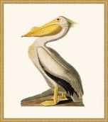 Audubon's White Pelican in Gold