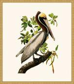 Audubon's Brown Pelican II in Gold