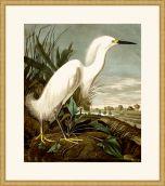 Audubon's Snowy Heron in Gold